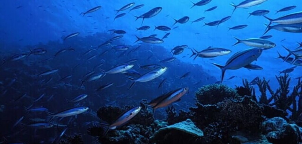 Pesci-ubriachi-nell-oceano
