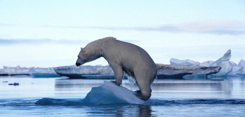 surriscaldamento terrestre orso polare