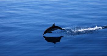 delfino arpionato e mutilato