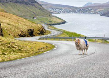 Sheep View 360