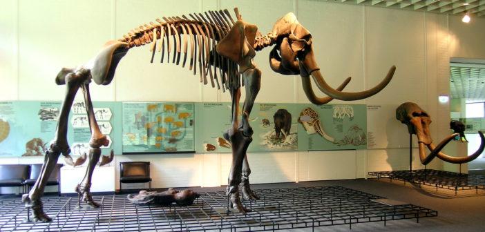 Scheletro di mammut
