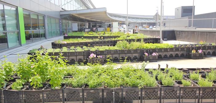 orto in aeroporto
