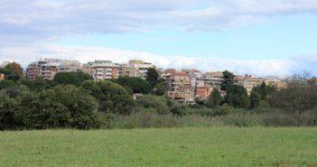 Dal clima alla salute, i benefici delle foreste urbane