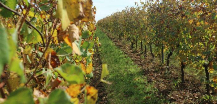 Agrifood, l'innovazione viene da Bologna