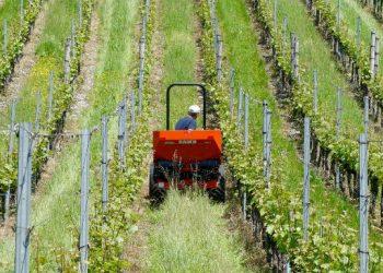 Agricoltura, la sfida del nuovo millennio è senza pesticidi