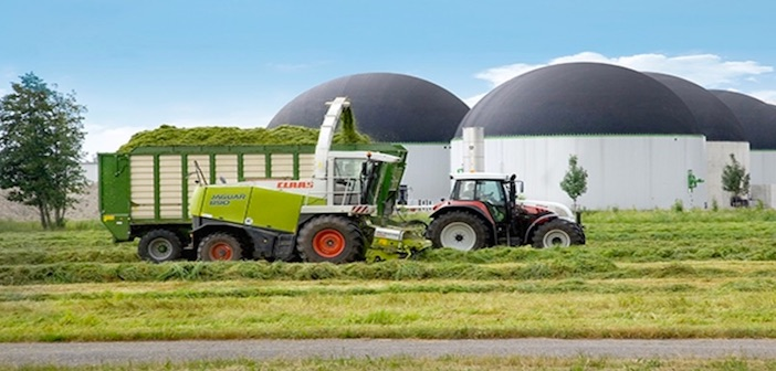 biocarburante dall'erba