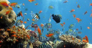 deossigenazione degli oceani