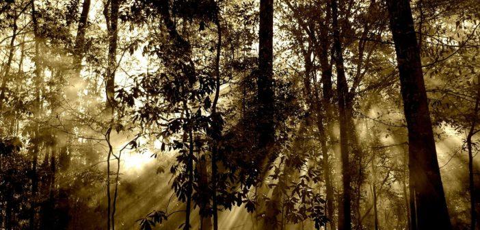 migrazione delle foreste