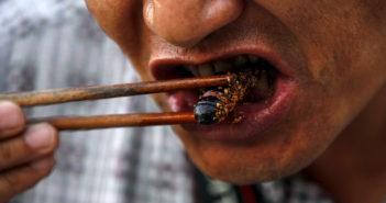 mangiare gli insetti