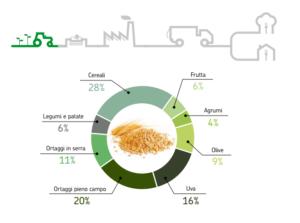 """Ripartizione percentuale della produzione agricola rimasta nei campi (2009). Fonte: """"Lo spreco alimentare: cause impatti e proposte"""", Barilla Center for Food and Nutrition"""