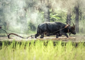 agricoltura metodi antichi