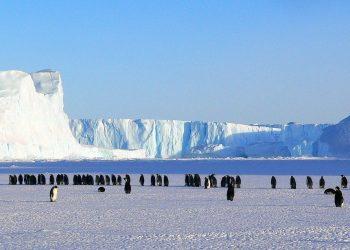Antartide: ecco la riserva marina più grande al mondo, riserva naturale