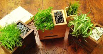 L'ultima frontiera della sostenibilità è il bio computer, un pc sostenibile che utilizza legno di scarto e una pianta per consumare cinque volte meno