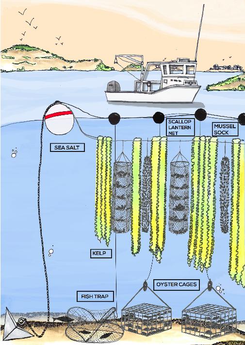 La piscicoltura sostenibile e le piantagioni di alghe oceaniche cambieranno il futuro dell'agricoltura e della nostra alimentazione? Qualcuno ci scommette!