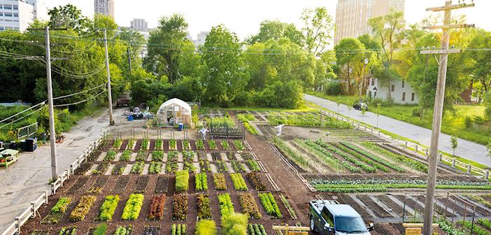 agricoltura di quartiere