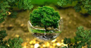 Politiche green