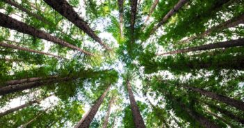 smart forest