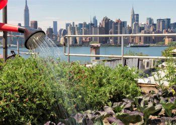 Agricoltura urbana negli Usa