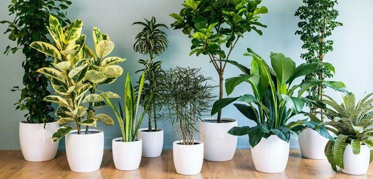 Salubrit dell 39 aria piante d 39 appartamento alleate numero for Piante e fiori da appartamento