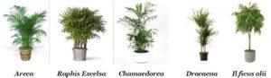 Le piante che aumentano la salubrità dell'aria