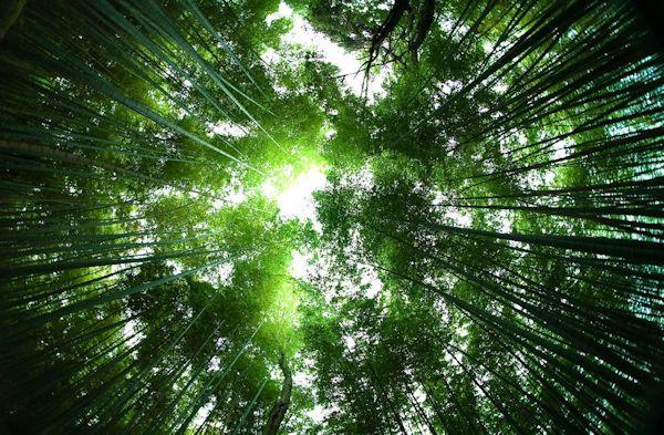 Bagnarsi di verde e circondarsi di alberi avrebbe degli effetti benefici sull'uomo. In Giappone dilaga la moda del forest bathing l'immersione nelle foreste