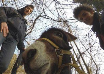 Da Palermo a Torino, un viaggio a piedi in compagnia di un asino