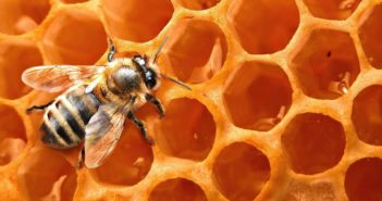Petizione Avaaz per salvare le api