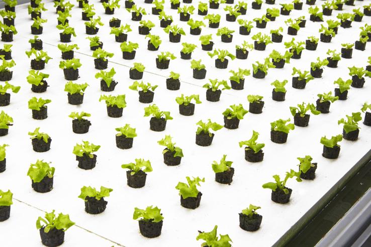 Quello delle coltivazioni indoor è qualcosa di più di una semplice possibilità, ma diventa in certi casi una vera e propria necessità per il futuro