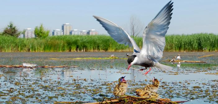 biodiversità urbana