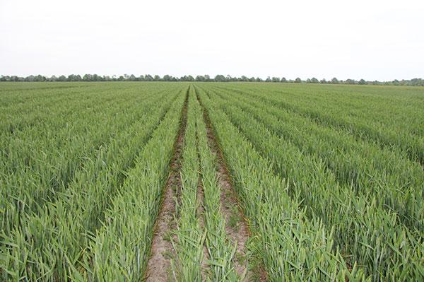 agricoltura di precisione
