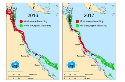 Cambiamenti climatici: la morte della barriera corallina (foto: The Conversation)