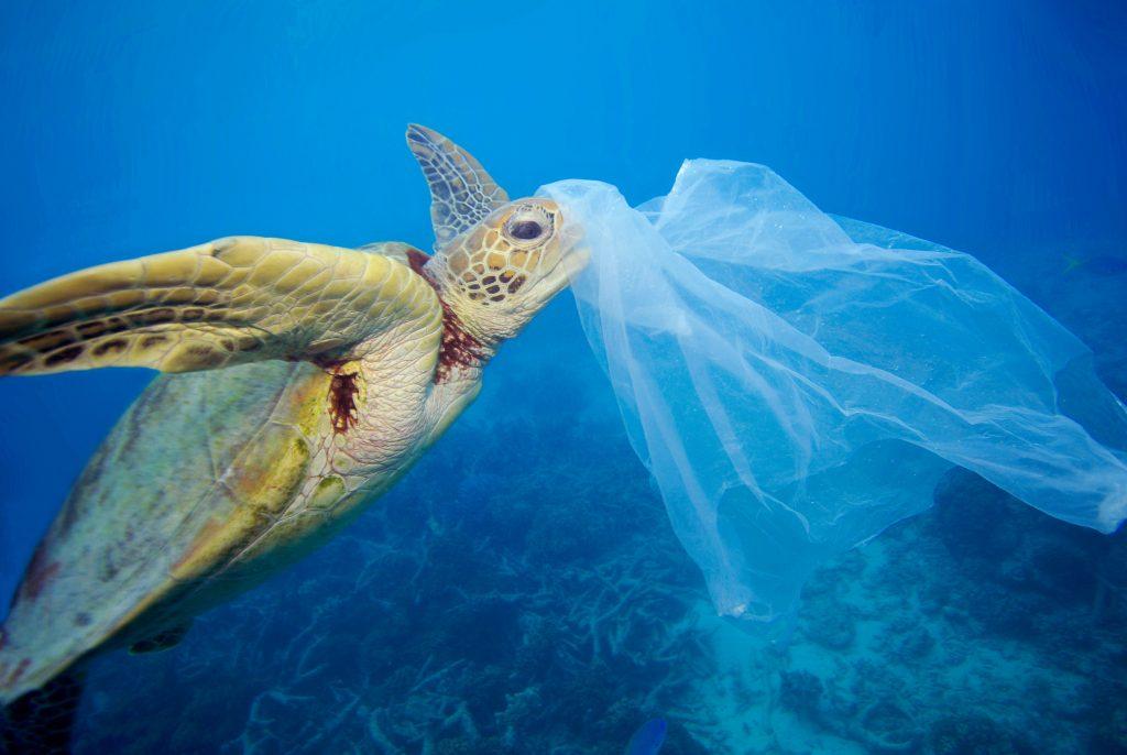 inquinamento oceanico