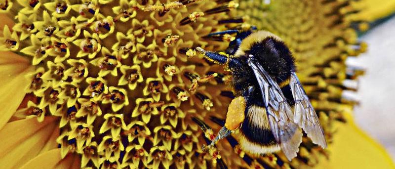 Pesticidi biologici: gli insetti in soccorso dell'uomo per un'agricoltura ecosostenibile