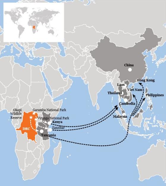 viaggio del commercio dell'avorio (foto: https://www.worldwildlife.org/)