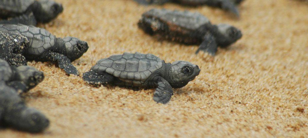 protezione delle tartarughe