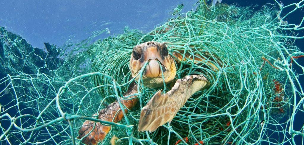 Protezione dei mari: tartaruga intrappolata rete da pesca fantasma