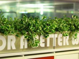 Ufficio sostenibile: alcuni trucchi per lavorare meglio e inquinare meno