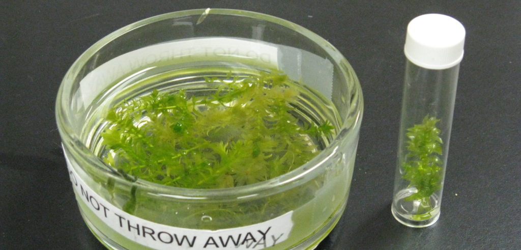 Fotosintesi in laboratorio