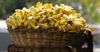 Energia elettrica dalle banane: ecco l'invenzione sostenibile di un ragazzo indiano
