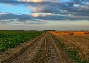 Agricoltura bio e bio industriale