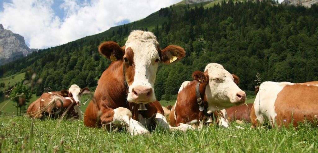 Macellazione su richiesta: una via per ridurre l'impatto ambientale degli allevamenti
