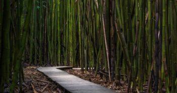 Ecodesign in bamboo