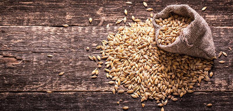 Riciclo degli scarti alimentari: nuova vita per il grano della birra