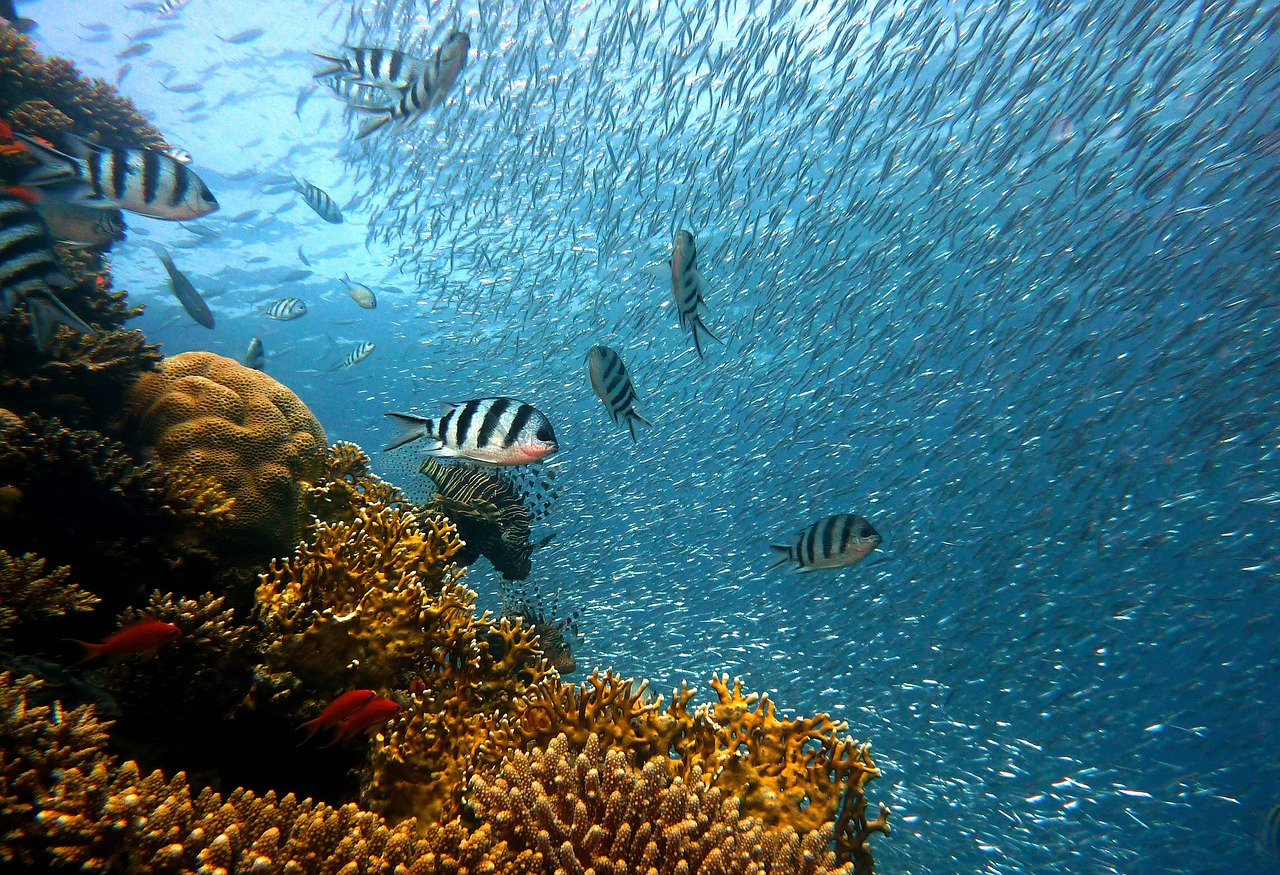 Protezione e ricerca per gli oceani