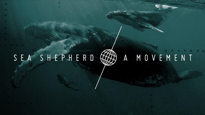 salvaguardia degli oceani