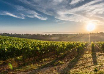 Effetti dei cambiamenti climatici sul vino: la situazione critica del Mediterraneo