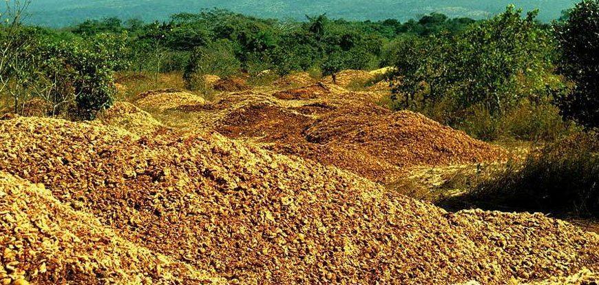 Agricoltura circolare: l'enorme potenziale dei prodotti di scarto