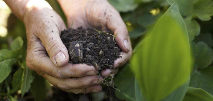 Agricoltura biologica in Italia: crescita vertiginosa del settore