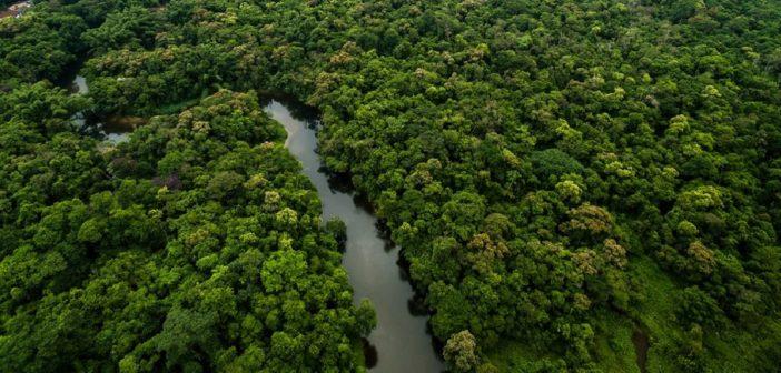 Ambiente e film: foresta Amazzonia (foto: www.drawdown.org)