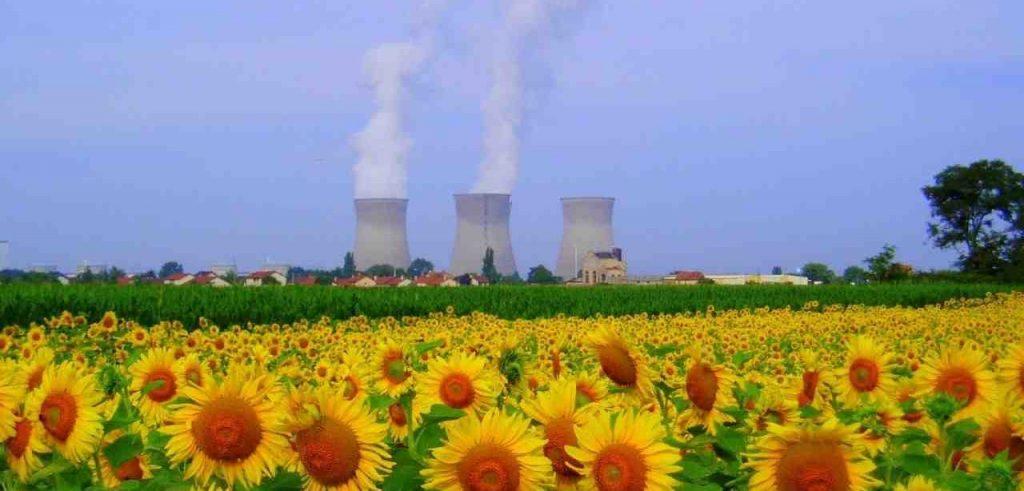 Fitodepurazione ambientale: le piante possono combattere l'inquinamento dei terreni